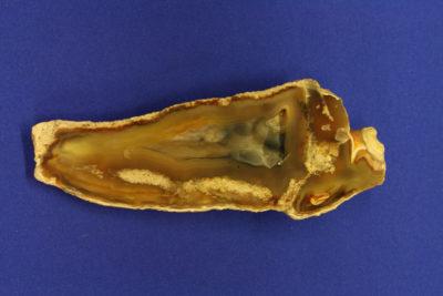 Agat Korall 45g 3.5×9.5cm fra Florida