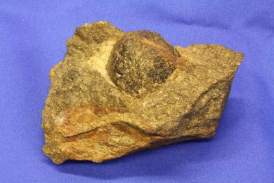 Granat Almandin krystall i moderstein fra Nesodden 0.45kg 5x10cm