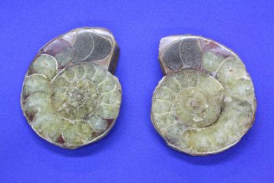 Ammonitt A Jura ca 175mill. år fra Madagaskar 125g 5x6cm pris pr par