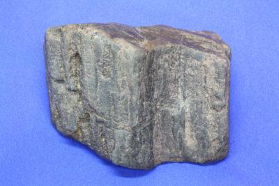 Forsteinet tre B Dadoxylon ca 280mill. år 340g 7×8.5cm fra Chemnitz i Tyskland
