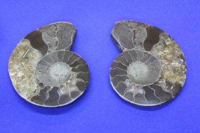 Ammonitt B Jura ca 175mill. år fra Madagaskar 105g 5.5x7cm pris pr par