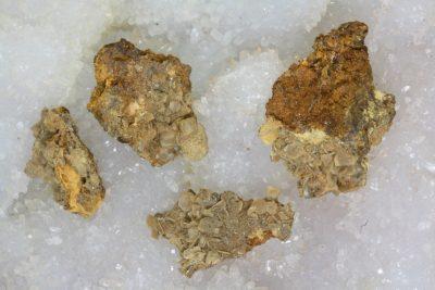 Wulfenitt krystaller på moderstein 1 til 2cm fra Los Lamentos i Mexico i mikroeske