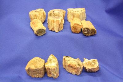 Forsteinet tre kvister på 3 til 4cm