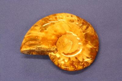 Ammonitt C polert fra Mahajanga Madagaskar Tid:Kritt 100g 6×7.5cm