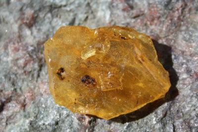 Copal 16g 4x5cm Tid: Pliocen ca 4mill år fra Sava i Madagaskar