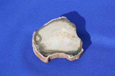 Forsteinet tre B Trias ca 225mill. år 100g 6cm ca 1.5cm tykk fra Ambilobe på Madagaskar