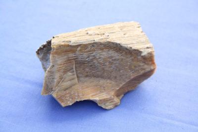 Agat palmholz (Forsteinet palmetre) 200g 5.5x8cm