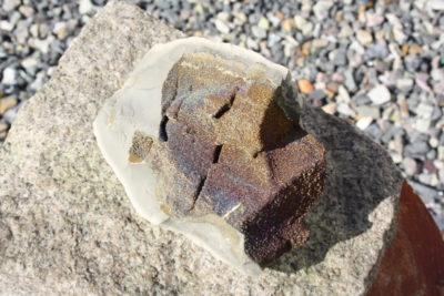Septarie med sideritt og pyritt fra Steendorp i Belgia 0.57kg 9x11cm