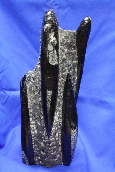 Orthocer A polert skulptur 2.2kg 25cm høy ca 400mill år fra Erfoud i Marokko