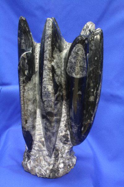 Orthocer B polert skulptur 2.3kg 22cm høy ca 400mill år fra Erfoud i Marokko