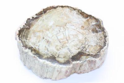 Forsteinet tre A 0.75kg 9.5×11.5cm 4cm tykk Trias ca 225mill. år fra Ambilobe, Madagaskar