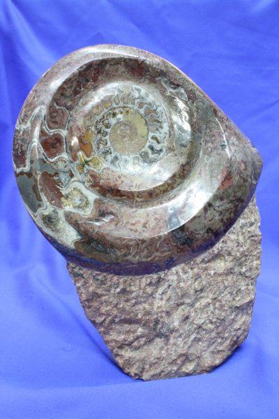 Ammonitt på søyle A 2.25kg 22cm høy fra Marokko