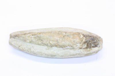 Fossil fisk 105g 3.5x10cm ca 92mill år fra Santanaformasjon i Brasil